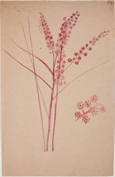 An image of (Plant study) (Late Sydney Period) by William Dobell