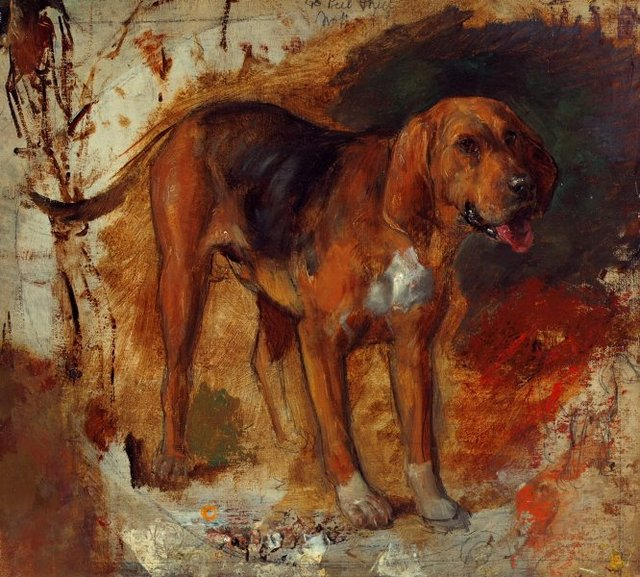 An image of Study of a bloodhound