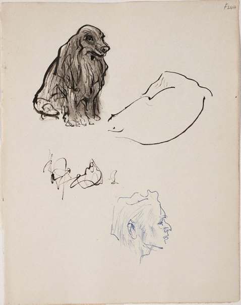 An image of (Dog studies and head) (Late Sydney Period) by William Dobell