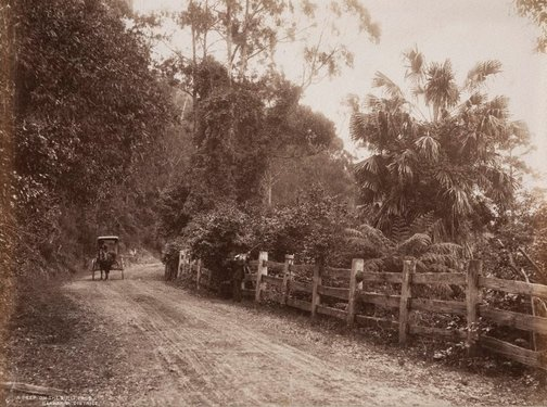 An image of A peep on the Bulli Pass, Illawarra District by Unknown, NSW Government Printer