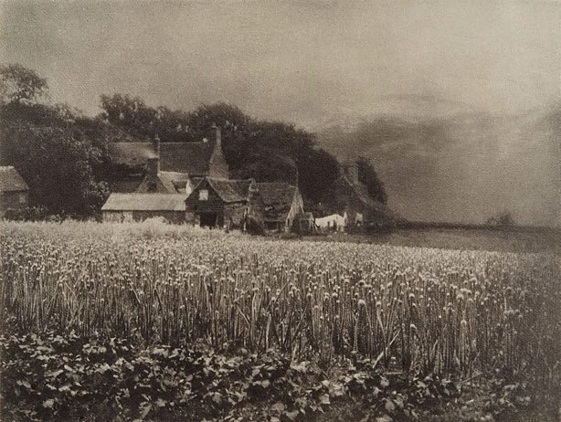 An image of The onion field 1890, from Camera Work, no 8, April 1907