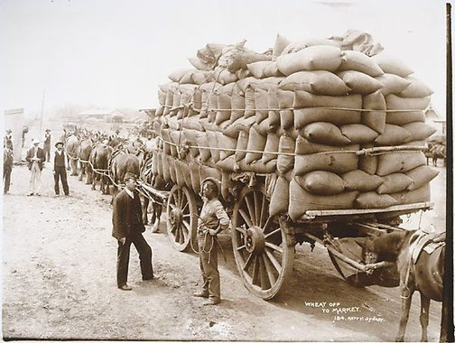 An image of Wheat off to market by Unknown, Kerry & Co