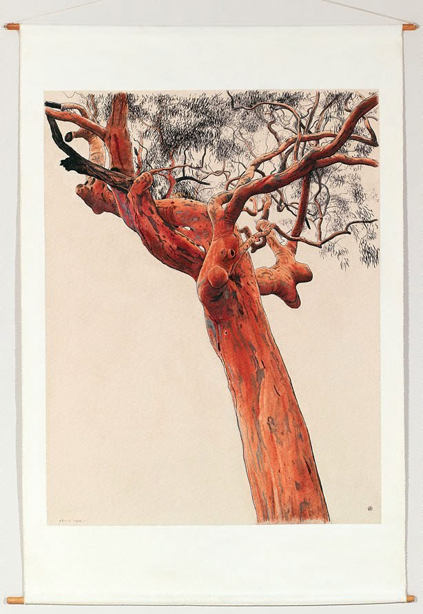 An image of Large angophora drawing