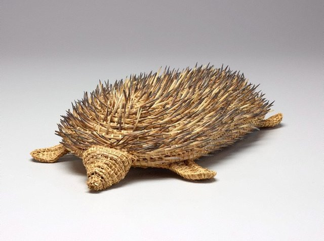 An image of Echidna