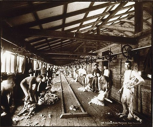 An image of Shearing board, Burrawang by Unknown, Kerry & Co
