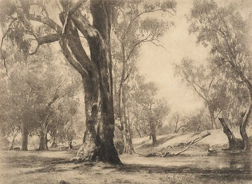 An image of River gums by Harold Cazneaux