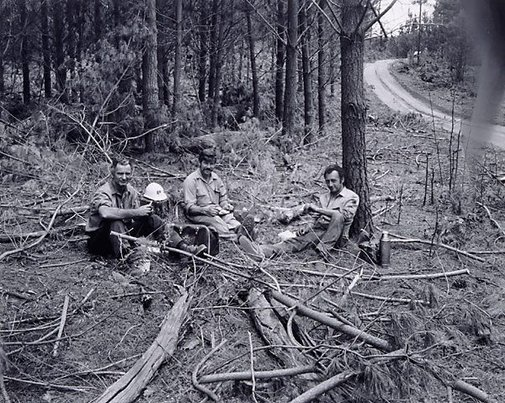 An image of CSR employees, forest near Tumut, New South Wales by Fiona Hall