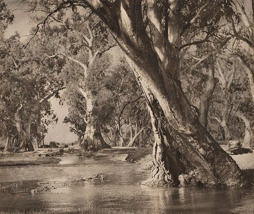An image of A billabong by Harold Cazneaux