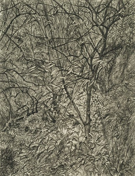 An image of Garden in winter by Lucian Freud
