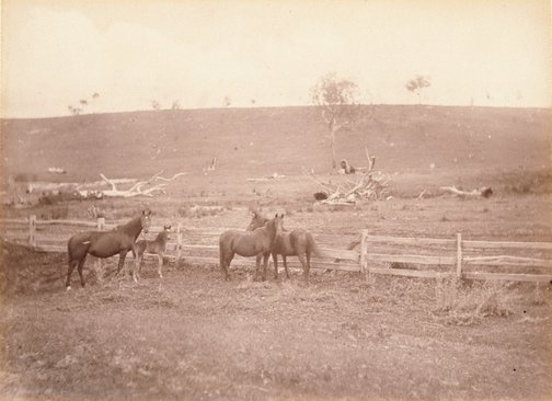 An image of Horses in a paddock by Charles Bayliss