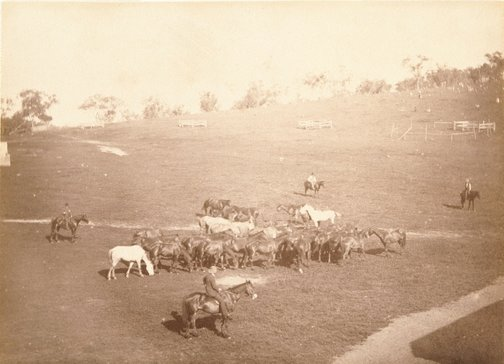 An image of Stockman and a group of horses by Charles Bayliss