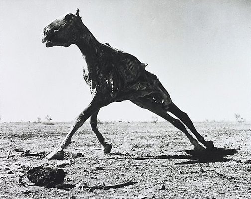 An image of Carcass by Sidney Nolan