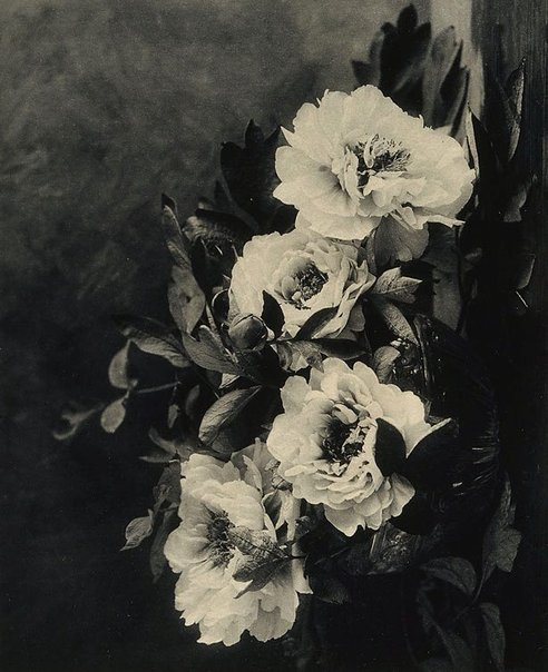 An image of Peonies by E Louise Marillier