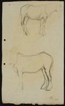 Alternate image of recto: Two work horses verso: Work horse by Lloyd Rees