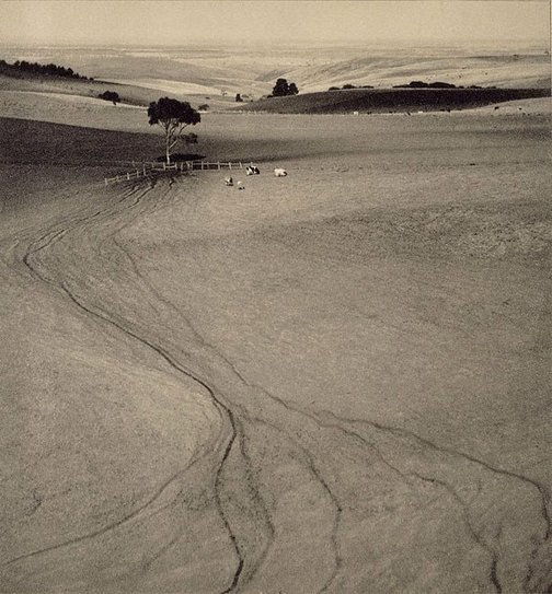 An image of Cattle tracks by John B. Eaton