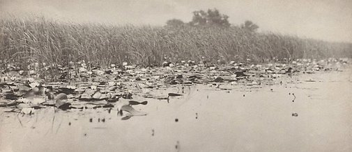 An image of Water-lilies by Peter Henry Emerson