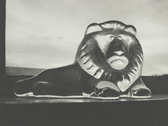 An image of A Taranaki lion