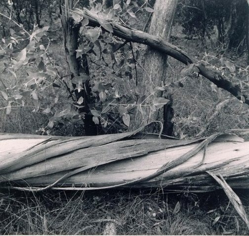 An image of triangular stump by Marion Marrison