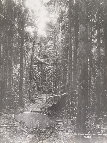 An image of Road through the scrub by Unknown