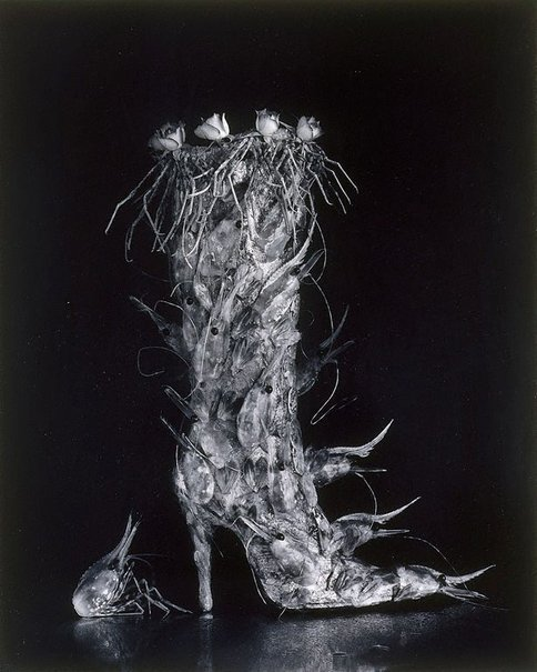An image of Boot of shrimps by KON Michiko