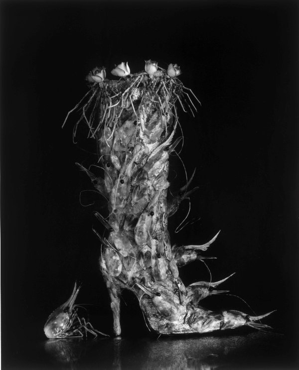 An image of Boot of shrimps