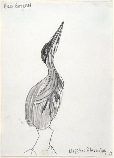 An image of Untitled (Black Bittern) by Kathy Temin