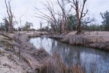 An image of 7. Bottle Bend near Mildura by Bonita Ely