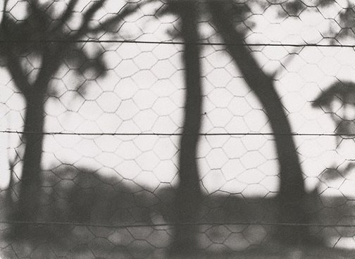 An image of Through the fence by Olive Cotton