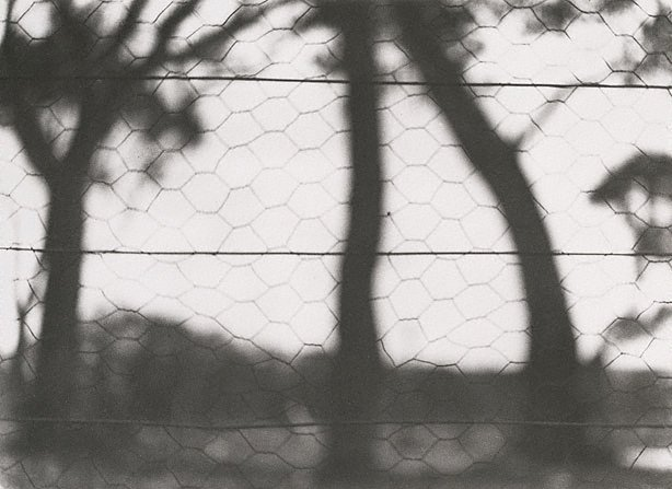 An image of Through the fence