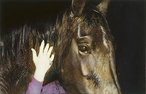 An image of Untitled (horse and hand) by Kate Breakey