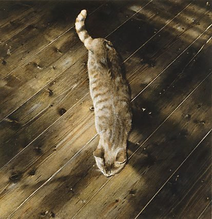 An image of Untitled (cat) by Kate Breakey