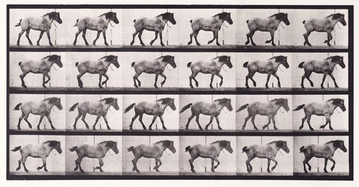 "An image of Animal Locomotion - An Electrophotographic Investigation of Consecutive Phases of Animal Movements. Plate 574. ""Hansel"" walking, free [Vol. 9 Horses] by Eadweard Muybridge"