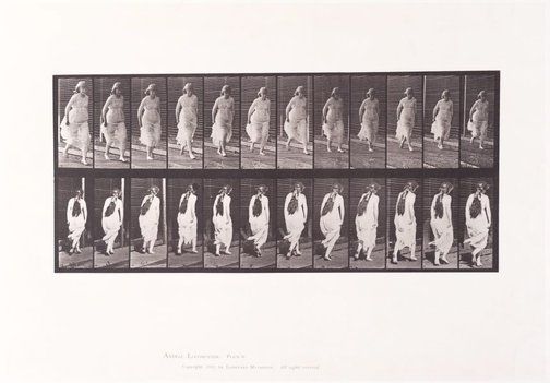 An image of Animal Locomotion - An Electrophotographic Investigation of Consecutive Phases of Animal Movements. Plate 71. Running [Vol. 6 Females (Semi-Nude & Transparent Drapery) & Children] by Eadweard Muybridge