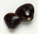 Alternate image of Netsuke in the form of two clam shells by