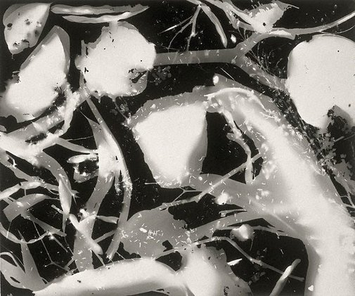 An image of Photogram (branches, twigs, amoebic forms) by Sue Ford