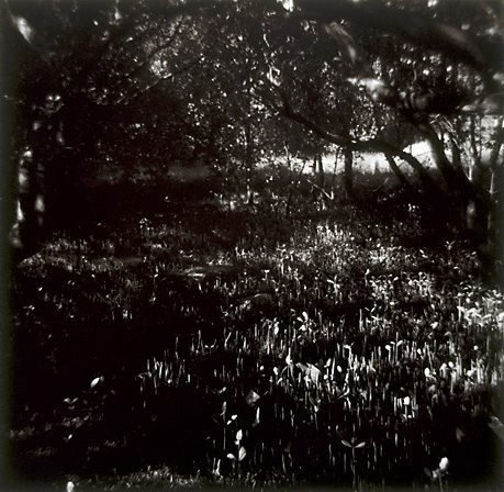 An image of Untitled (swamp) by Christine Cornish