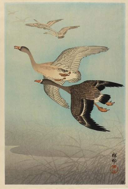 An image of Flying geese by OHARA Shôson