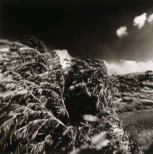An image of Wind and bottlebrush tree, BBC Colliery by Max Pam