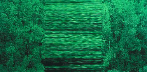 An image of greenwork, treewallstretch by Rosemary Laing