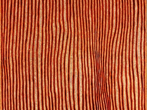 An image of Untitled (Tjiturrulpa) by Eileen Napaltjarri