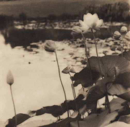 An image of Untitled (Waterlillies) by James S Stening