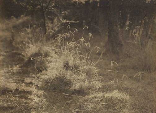 An image of Untitled (Grasses) by James S Stening