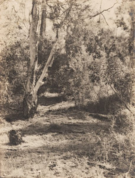 An image of Untitled (Ti tree and path) by James S Stening