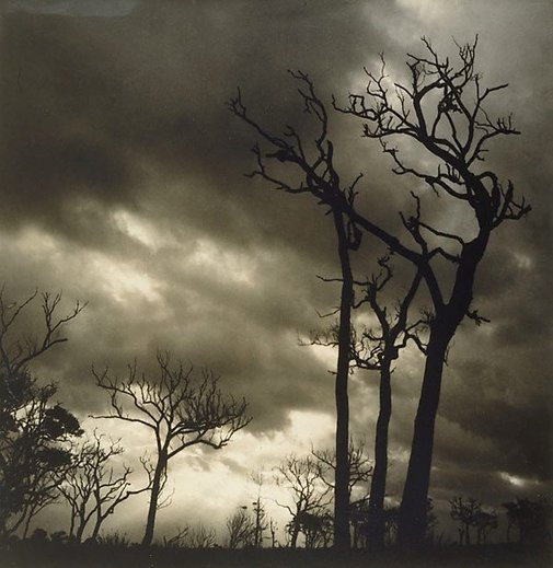 An image of Storm by Olive Cotton