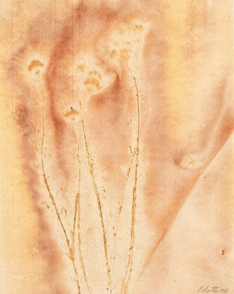 An image of Untitled (four long stems with four flowers at ends, pale yellow/brown) by Juliana Swatko