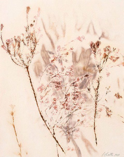 An image of Untitled (two branches covered in fine, pink foliage) by Juliana Swatko