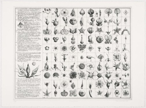 An image of Diary and 100 buds by Jörg Schmeisser