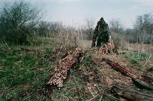 An image of Colour photograph documenting earth / body work with tree trunk and fungus, Old Man's Creek, Iowa by Ana Mendieta