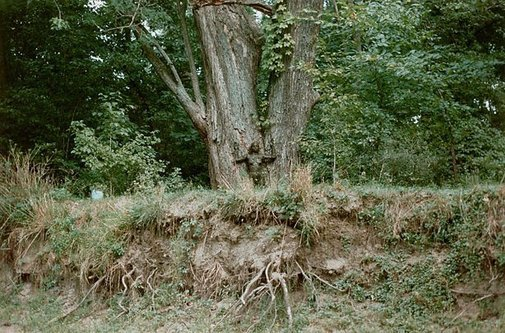 An image of Colour photograph documenting earth / body work with tree and mud, Old Man's Creek, Iowa City, Iowa by Ana Mendieta