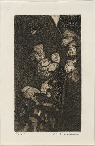 An image of Panel from 'Cosmos in the garden' by Fred Williams